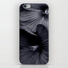 Elegant Pair of Hibiscus Flowers in Deepest Aubergine Monotone Monochrome iPhone & iPod Skin