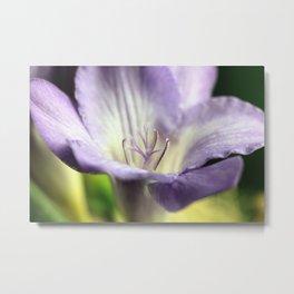 Freesia flowers Metal Print