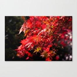 Autumn At Winkworth Canvas Print