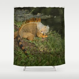 Iguana in the Sun Shower Curtain