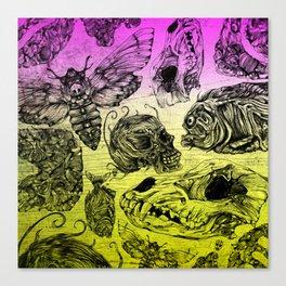 Bones and color Canvas Print