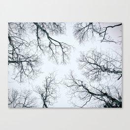 Spring Trees Canvas Print