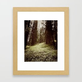 Mountain Forest Clearing Framed Art Print
