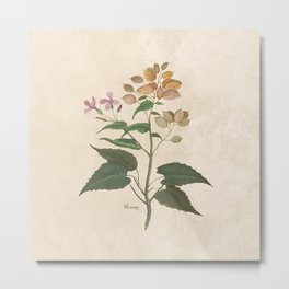 Honesty - botanical Metal Print