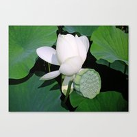 lotus flower Canvas Prints featuring Lotus. by Assiyam