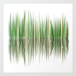 Reed Phragmites Australis Art Print