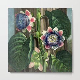 The Quadrangular Passion Flower :  New Illustration Of The Sexual System Metal Print