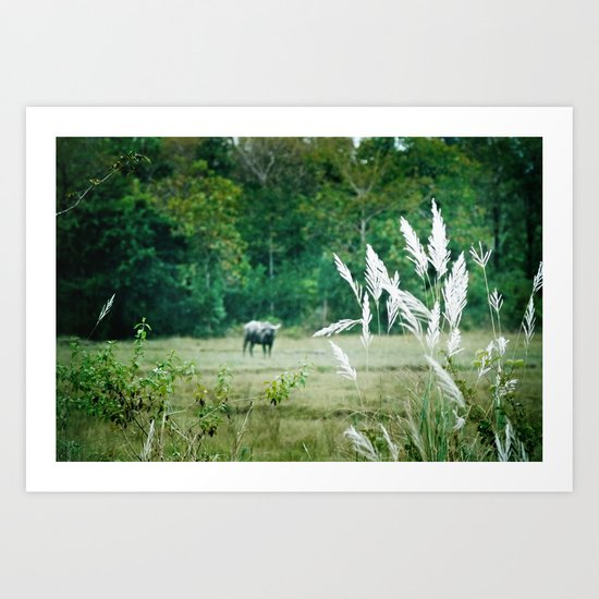 06 water buffalo Art Print