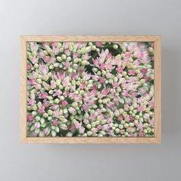 Mint Green and Blush Pink Sedum Framed Mini Art Print