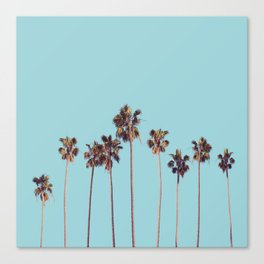 palm trees turquoise Canvas Print