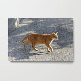 Simba Cat in Golden Sunlight Metal Print