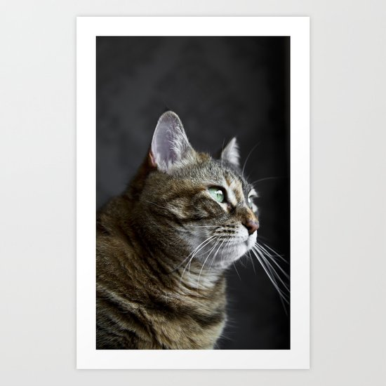 Cat portrait Art Print