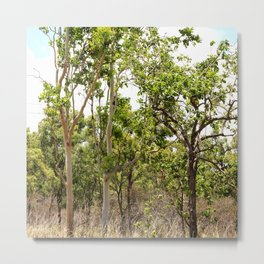 Beautiful forest regrowth Metal Print