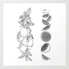 Citrus Branch of Lemons and Slices of Fruit Art Print