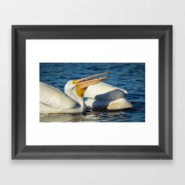 American White Pelican Catching a Minnow Fish Framed Art Print