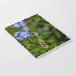Forget-me-nots In The Rain Notebook