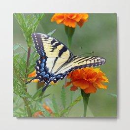 Eastern Yellow Tiger Swallowtail Metal Print
