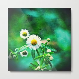 Asters on Green Velvet Metal Print