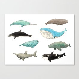 Marine animals Canvas Print