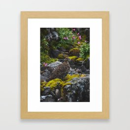 Grouse Framed Art Print