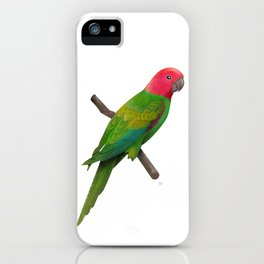 Colorful Parrot 2 iPhone Case