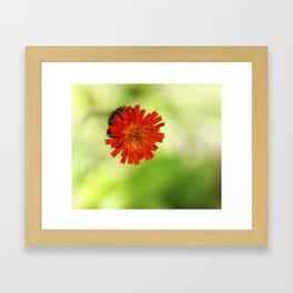 Floating Orange Delight Framed Art Print