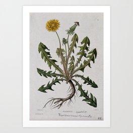 Botanical Dandelion Art Print