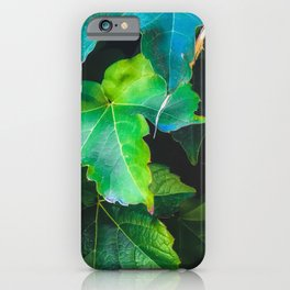 closeup green ivy leaves background iPhone Case