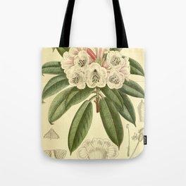 Rhododendron monosematum 1916 Tote Bag