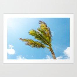Palm Tree, Blue Sky Art Print