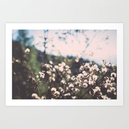 Faded white flowers on the side of a mountain Art Print