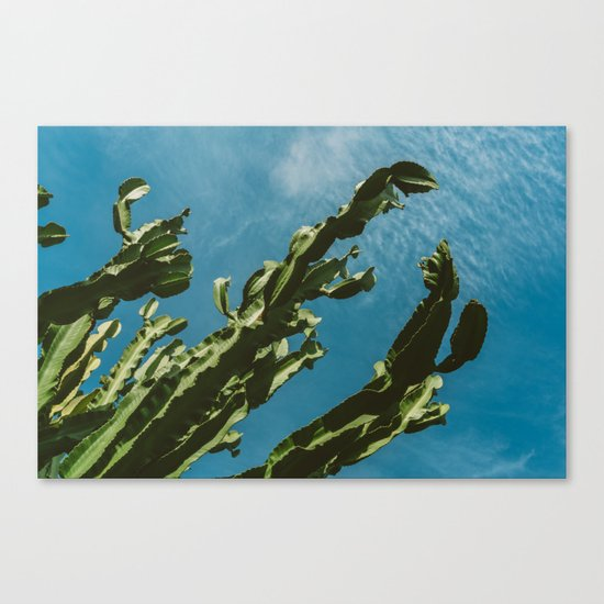 Cactus Sky III Canvas Print
