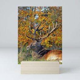 Red Deer Resting Mini Art Print