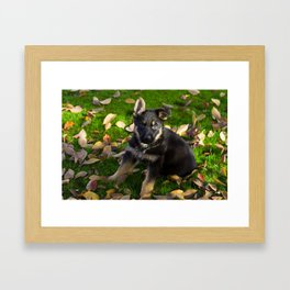 Little German Shepherd puppy Framed Art Print
