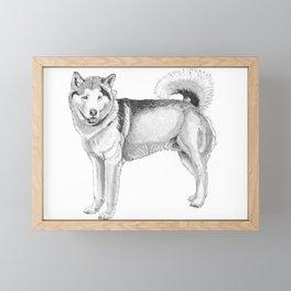 Alaskan malamute Framed Mini Art Print