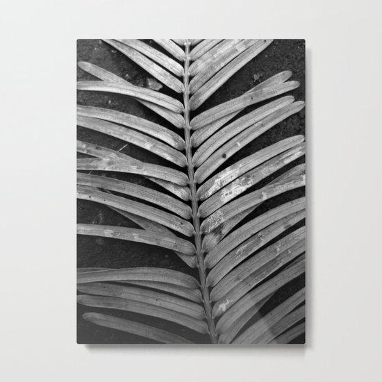 nature rib XI Metal Print