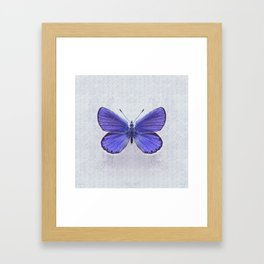 Violet Butterfly on Floral Background. Framed Art Print