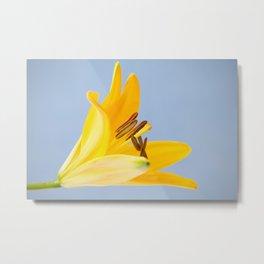Asiatic Lily 19 Metal Print