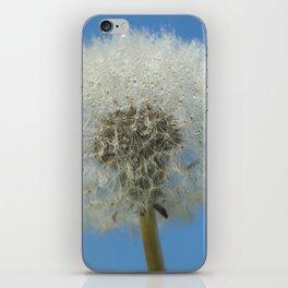 Wet dandelion iPhone Skin