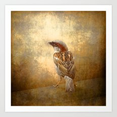 The little brown sparrow Art Print