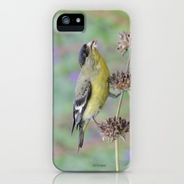 Lesser Goldfinch Snacks on Seeds iPhone Case