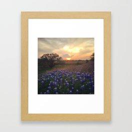 Texas Bluebonnet Sunset Framed Art Print