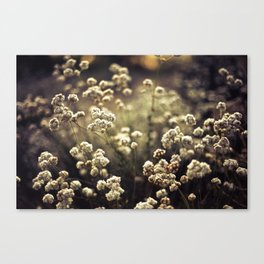 Baby's Breath Canvas Print