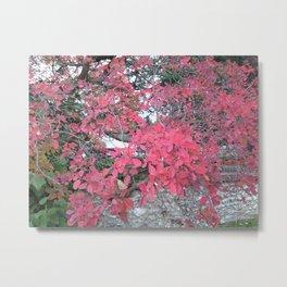 Autumn Tree Leaves Photo 777 Metal Print