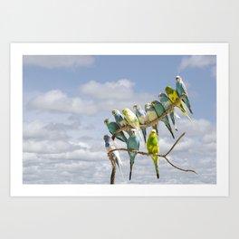 Parakeets perched on a limb Art Print