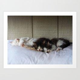 Sleeping Beauties Art Print