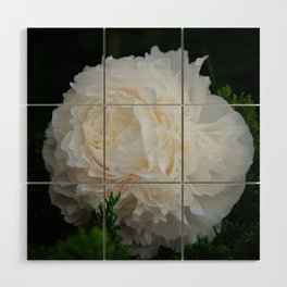 Champagne Peony by Teresa Thompson Wood Wall Art