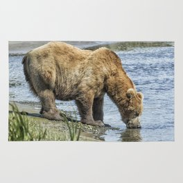 Thirsty Big Brown Male Bear Rug