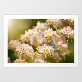 Aesculus chestnut tree blossoms Art Print