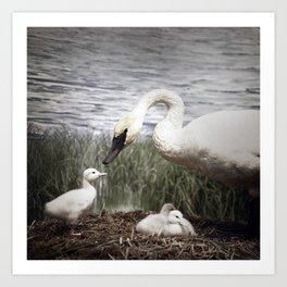 Tom Feiler Swan and her Cygnets Art Print